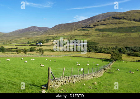 Luke's Mountain, Mourne Mountains, County Down, Ulster, Northern Ireland, United Kingdom, Europe - Stock Photo
