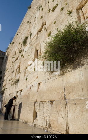 Orthodox Jew praying at the Western Wall, Old City, Jerusalem, Israel, Middle East - Stock Photo