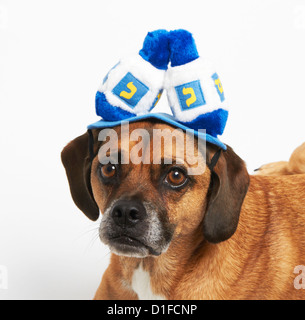 Puggle in Hanukkah hat - Stock Photo