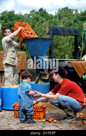A family of cider makers mashing apples before pressing at Broome Farm near Ross-on-Wye UK where there is free camping - Stock Photo