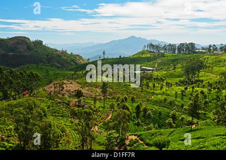 View of tea plantations from Lipton's Seat, Haputale, Sri Lanka, Asia - Stock Photo