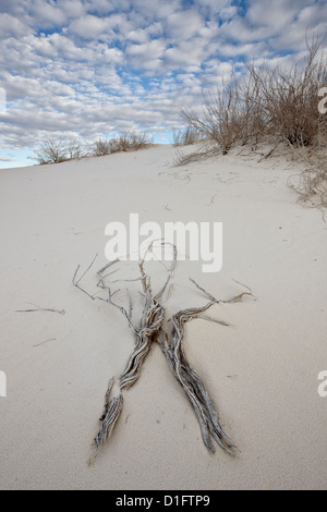 Twigs on the dunes, White Sands National Monument, New Mexico, United States of America, North America Stock Photo