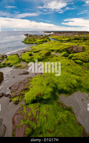 Rocks on the shoreline, covered with green seaweed, with sea and a blue sky with white clouds. - Stock Photo