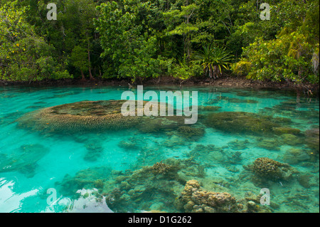 Giant clams in the clear waters of the Marovo Lagoon, Solomon Islands, Pacific - Stock Photo