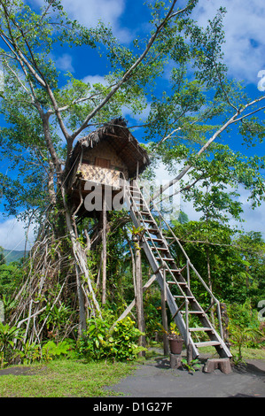 Tree house in a Banyan tree below the Volcano Yasur, Island of Tanna, Vanuatu, South Pacific, Pacific - Stock Photo