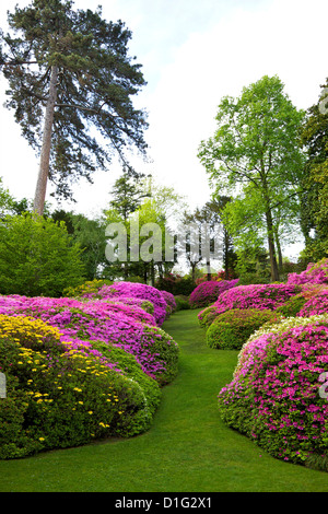 Azaleas in spring bloom, gardens of Villa Carlotta, Tremezzo, Lake Como, Lombardy, Italian Lakes, Italy, Europe - Stock Photo
