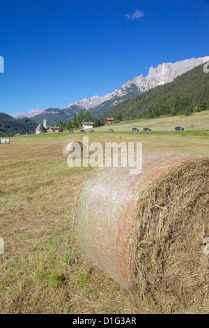 Hay field near Canazei, Canazei, Trentino-Alto Adige, Italy, Europe - Stock Photo