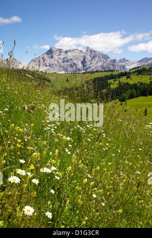 View from Col Alto, Corvara, Badia Valley, Bolzano Province, Trentino-Alto Adige/South Tyrol, Italian Dolomites, - Stock Photo