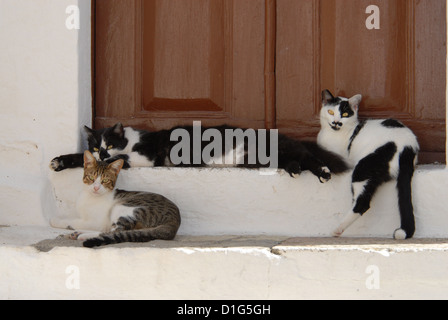 three cats, resting side by side on a threshold, Greece, Dodecanese Island, Non-pedigree Shorthair, felis silvestris - Stock Photo