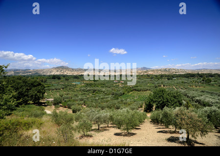 italy, basilicata, val d'agri, olive trees - Stock Photo