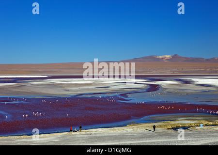 Flamingos on Laguna Colorada (Red Lagoon), Eduardo Avaroa Andean Fauna National Reserve, Southwest Highlands, Bolivia - Stock Photo