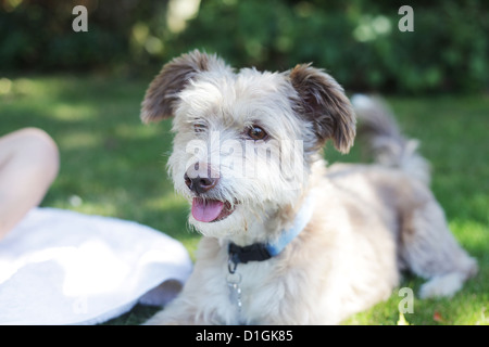 Small cute gray fluffy dog outside in a garden. - Stock Photo