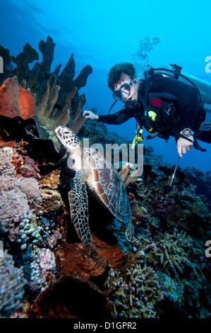Diver and green turtle (Chelonia mydas), Sulawesi, Indonesia, Southeast Asia, Asia - Stock Photo