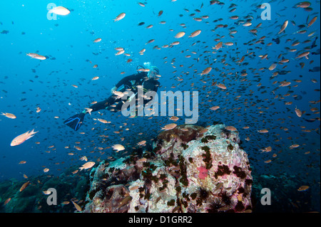 Diver swimming through a school of fish, Thailand, Southeast Asia, Asia - Stock Photo