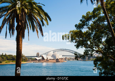 Sydney Opera House, and Sydney Harbour Bridge from the Botanic Gardens, Sydney, New South Wales, Australia, Pacific - Stock Photo
