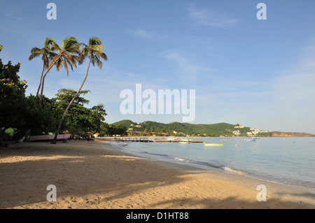 Blue sky morning view palm trees rising above Grand Anse Beach, south to Quarantine Point, St George's, Grenada, - Stock Photo