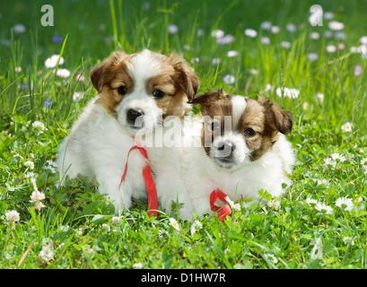 Half breed puppies in the garden - Stock Photo