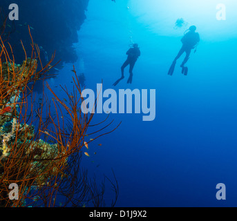 Silhouette of SCUBA divers next to a whip coral foreground on a deep coral reef wall - Stock Photo