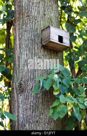 Closeup of an empty bird house on a tree trunk - Stock Photo