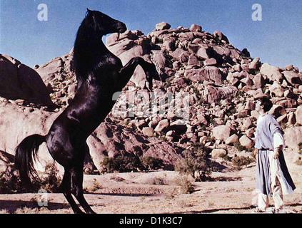 Der Schwarze Hengst Kehrt Zurueck  Black Stallion Returns,  Kelly Reno In die Staaten zurueckgekehrt, trainiert - Stock Photo