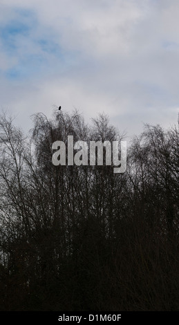 A single crow perched on a leafless tree, silhouetted against a cloudy sky. - Stock Photo