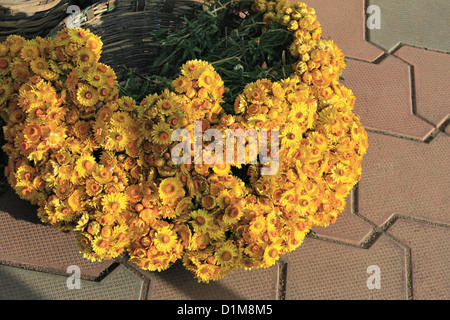 Basket full of small yellow flowers, in the market near, Government Botanical gareden, Udhagamandalam (Ooty), Tamil - Stock Photo
