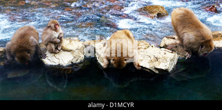 Japanese macaques Macaca fuscata, Nagano, Japan - Stock Photo