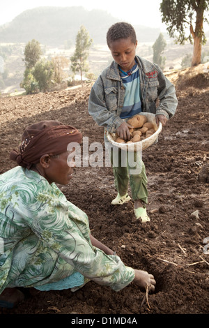 A family plants potatoes on their farmland in Ankober, Ethiopia. - Stock Photo