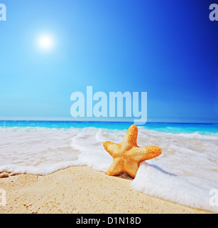 A view of a starfish on a beach with clear sky and wave, shot with a tilt and shift lens - Stock Photo