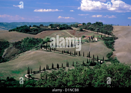 A zig-zag road lined with Italian cypress trees in Tuscany - Stock Photo