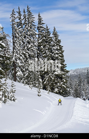 A nordic skier falls over at Mount Bachelor Nordic Skiing area, central Oregon Cascades - Stock Photo