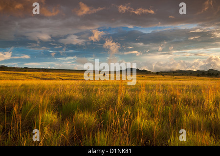 Grassy fields at sunset at the border of Volcan Baru national park, near the town Volcan in the Chiriqui province, - Stock Photo