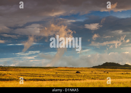 Grassy fields at the border of  Volcan Baru national park, near the town Volcan in the Chiriqui province, Republic - Stock Photo