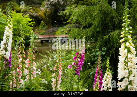 San Francisco Botanical Gardens In Golden Gate Park California Us Stock Photo Royalty Free