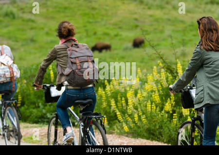 Young girls bicycling in Golden Gate Park with the Buffalo Paddock in the background, San Francisco, California - Stock Photo