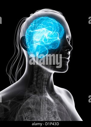 Female brain, artwork - Stock Photo