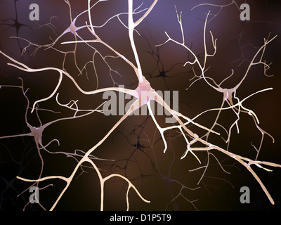 Nerve cells, artwork - Stock Photo