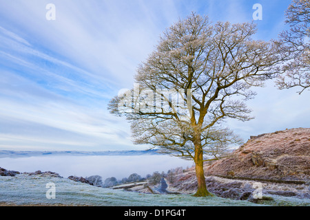 Frosty misty morning on Baslow Edge Peak District National Park, Derbyshire, England, UK - Stock Photo