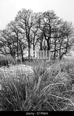 Wooded Copse in winter monochrome near Elterwater, Great Langdale, Lake District National Park, Cumbria, England, - Stock Photo
