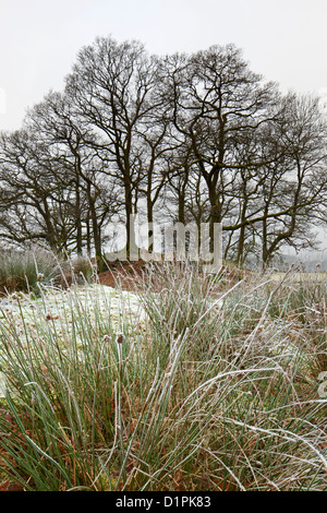 Wooded Copse in winter frost near Elterwater, Great Langdale, Lake District National Park, Cumbria, England, UK - Stock Photo
