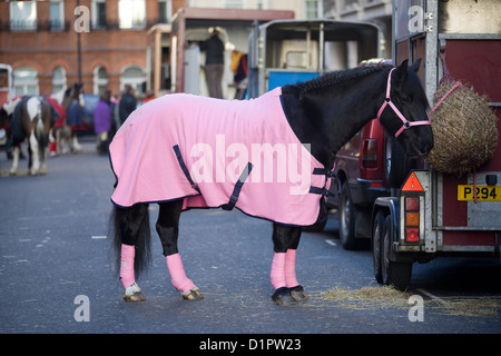 Horse Standing by a Horse Box in a Pink Rug Travel Bandages and Pink Halter in London England - Stock Photo