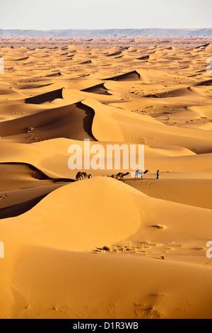 Morocco, M'Hamid, Erg Chigaga sand dunes. Sahara desert. Camel driver and camel caravan. - Stock Photo