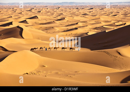 Morocco, M'Hamid, Erg Chigaga sand dunes. Sahara desert. Camel drivers and camel caravan.