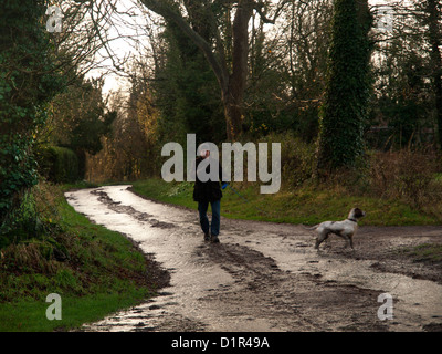In the wet Suffolk countryside a man takes his dog for a walk. - Stock Photo