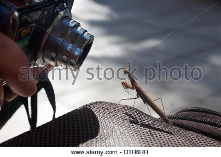 Outside Chania Airport in Crete, a praying mantis lands on a suitcase. - Stock Photo