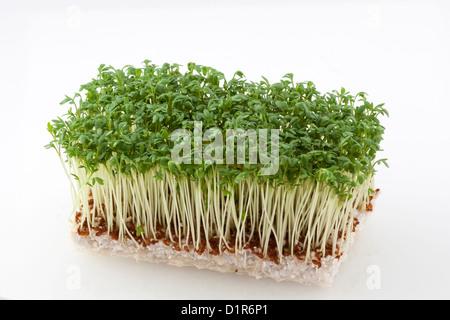 Rectangular cut of resh cress on white soil - Stock Photo