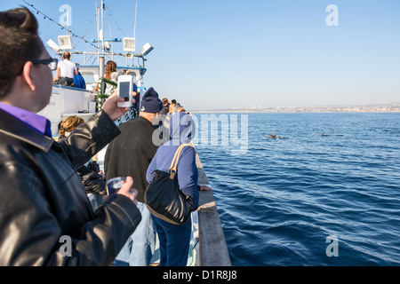 Whale watching off the coast of Newport Beach, California. - Stock Photo