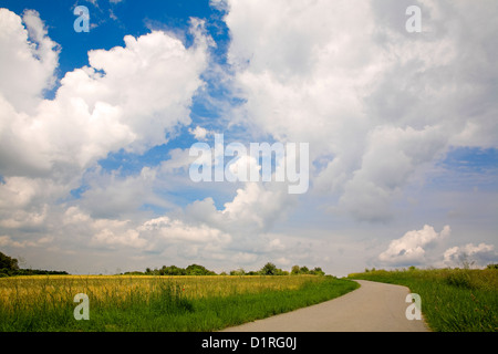 A asphalt fields road in a sunny day, to right/left cereal field and meadow,evening, by Beckingen, Saarland / Germany, - Stock Photo