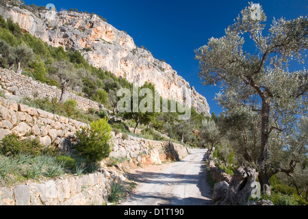 Alaró, Mallorca, Balearic Islands, Spain. Narrow switchback road beneath the vertical rock wall of Puig d'Alaró. - Stock Photo