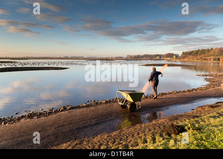 Martin Mere; Wildfowl and Wetlands Trust; UK - Stock Photo